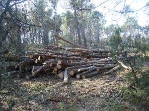 A Vilanova del Camí comença la retirada dels arbres caiguts fa un any