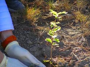 Plantada d'un centenar d'arbres de la mà de GEDEN