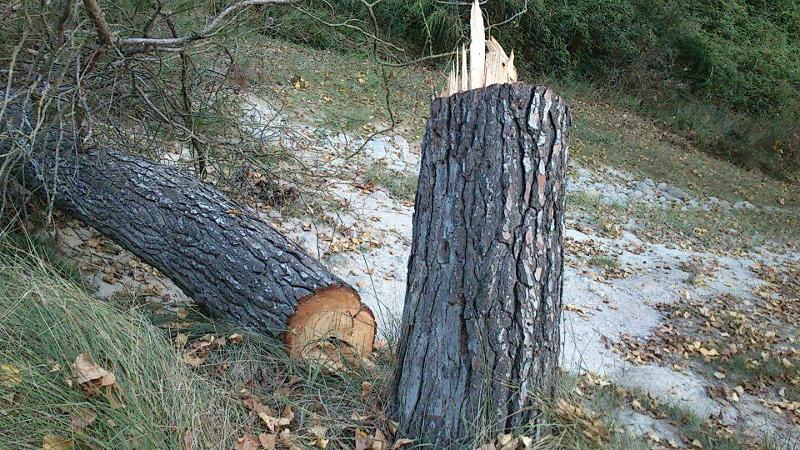 Protecció Civil denuncia la tala d'arbres a la zona de Rigat