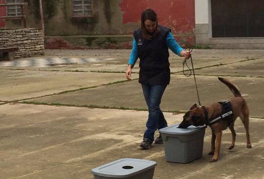 Vilanova acull un curs d'ensinistrament de gossos policials
