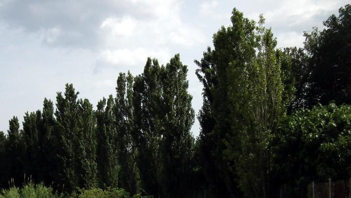 AVÍS – Tractament fitosanitari del pugó