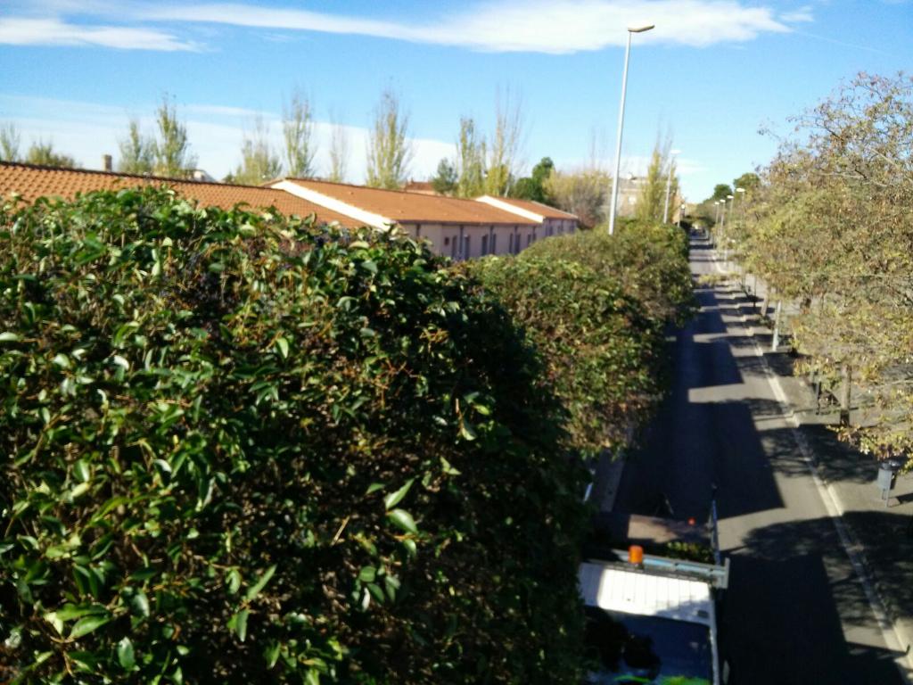 La brigada de jardineria inicia els treballs de poda de l'arbrat viari