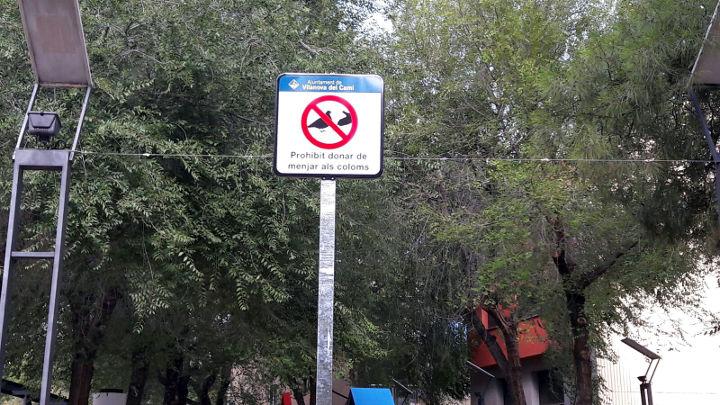 L'Ajuntament recorda que està prohibit donar de menjar als coloms a l'espai públic