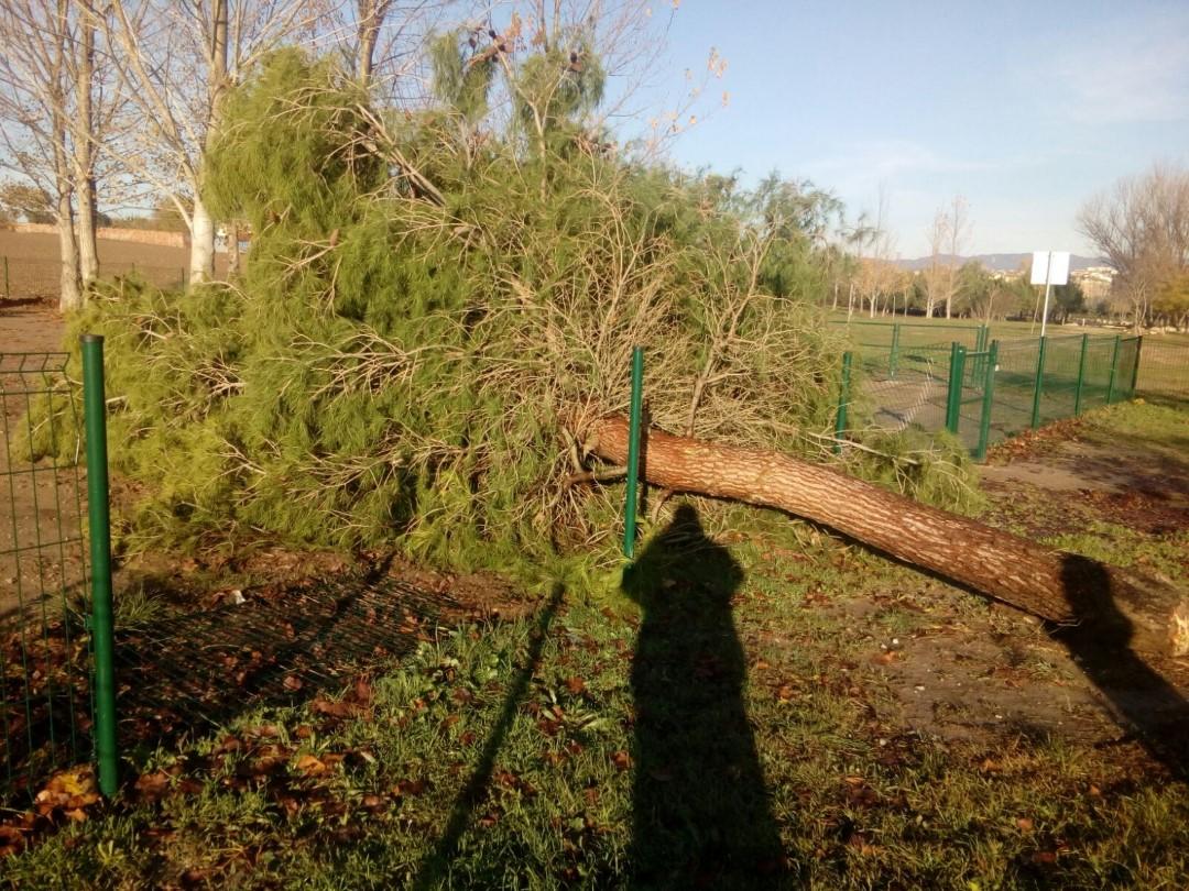 Una vintena d'arbres afectats per la tempesta de dimecres