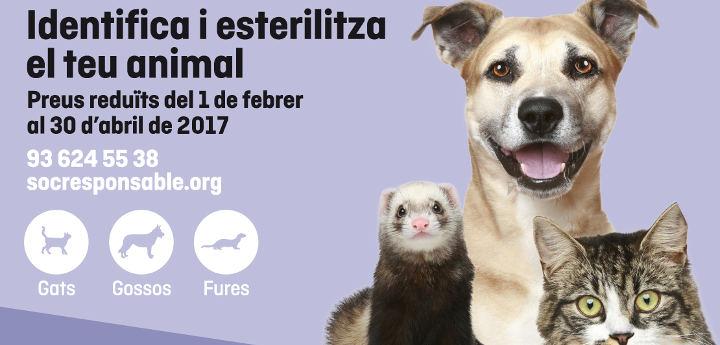Nova edició de la campanya Soc responsable amb els animals de companyia