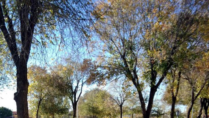 AVÍS – Es talen pollancres per evitar les molèsties ocasionades pel borrissol