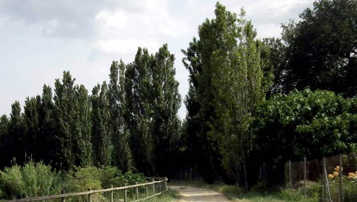 Comença la replantació d'arbres que sumarà 119 exemplars en diferents zones del municipi