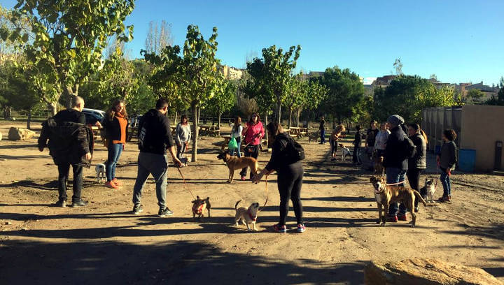 Una trentena de persones i les seves mascotes gaudeixen del curs d'educació canina al Parc Fluvial de Vilanova