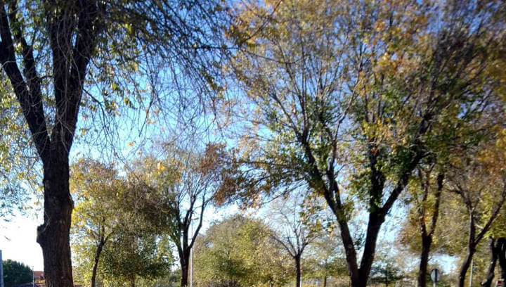 Nova tala d'arbres a la C-244 per evitar riscos