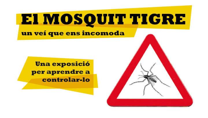 'Al mosquit tigre, ni una gota d'aigua', la millor manera de prevenir i minimitzar riscos