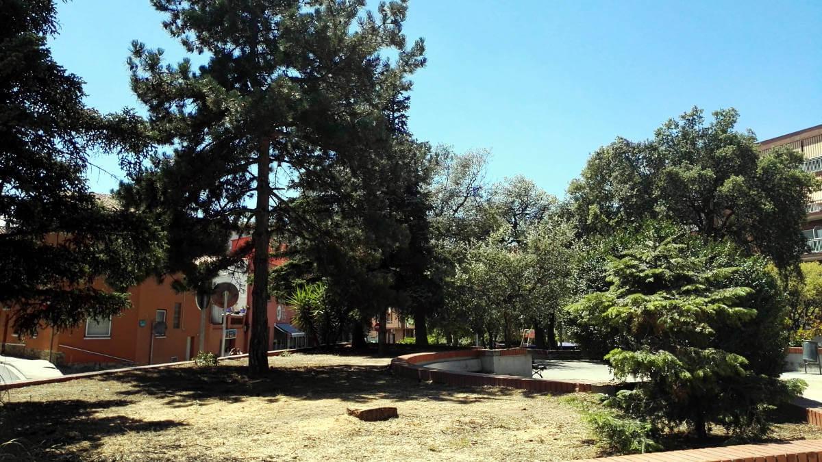 Es tala un arbre de la plaça Vilarrubias amb una avançada malaltia de fongs